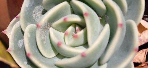 アイキャッチ多肉植物七福神