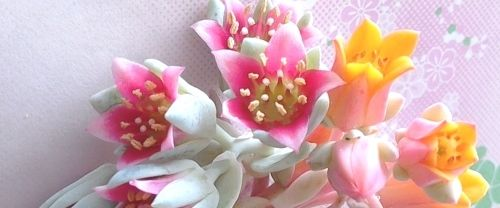 アイキャッチ多肉植物の花